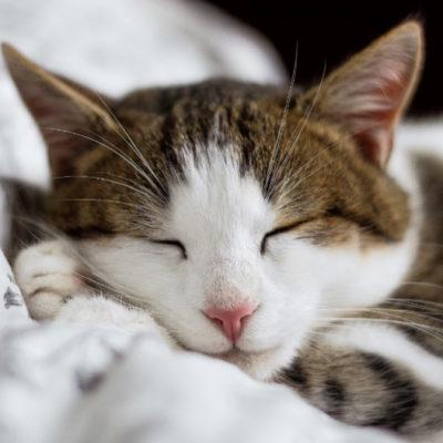 睡眠時間のベストは?受験生に贈る最適の睡眠時間と睡眠法