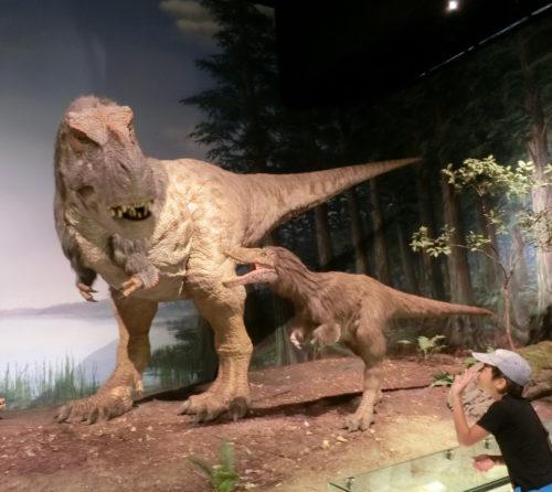 ミュージアムパーク茨城県自然博物館!感動の体験レポを写真で解説